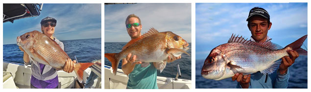 snapper-fishing-strip